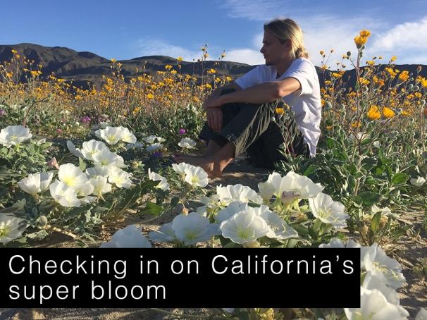 super bloom blog photo.jpg
