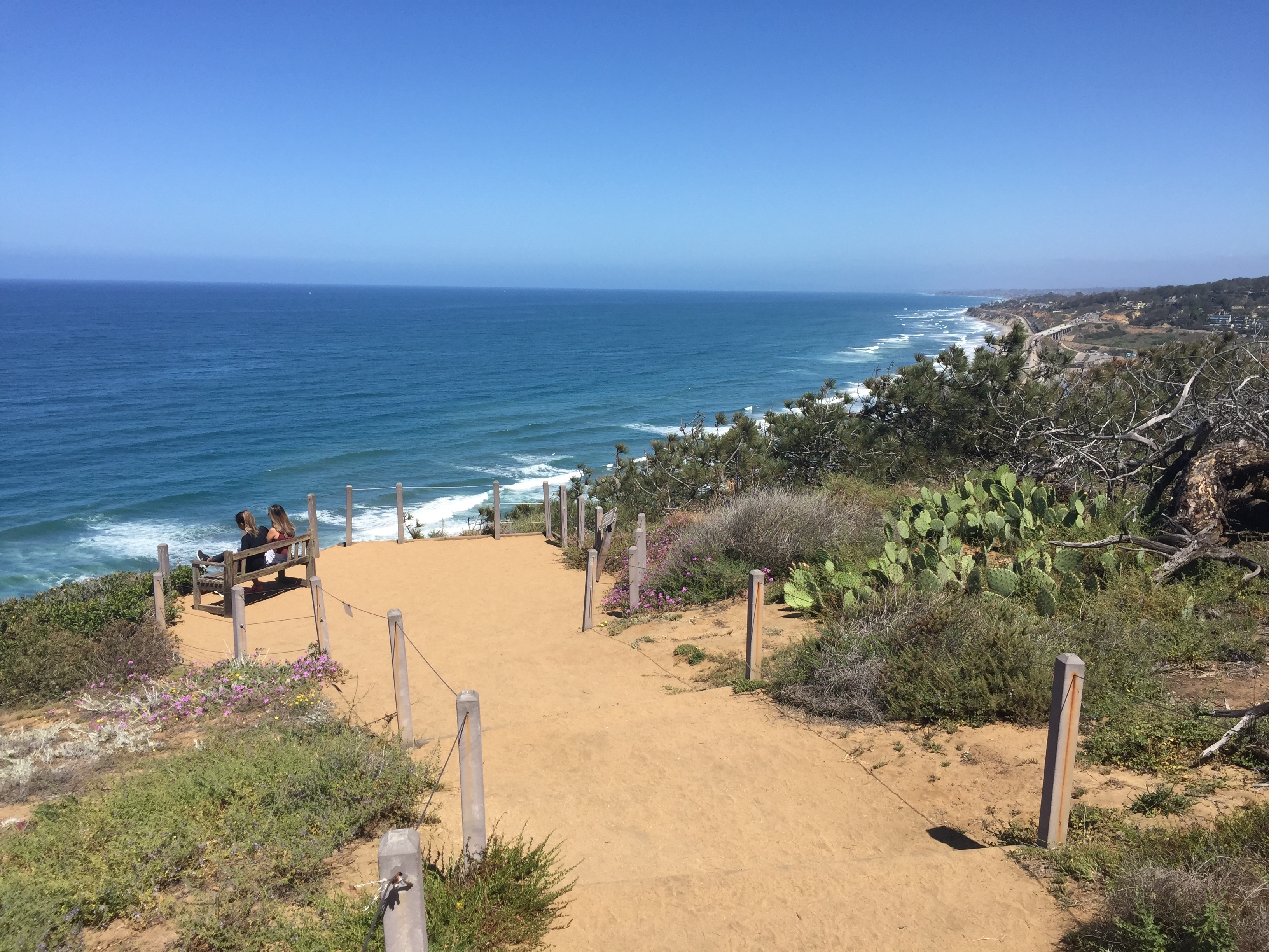A dirt pathway along the bluff at Torrey Pines.