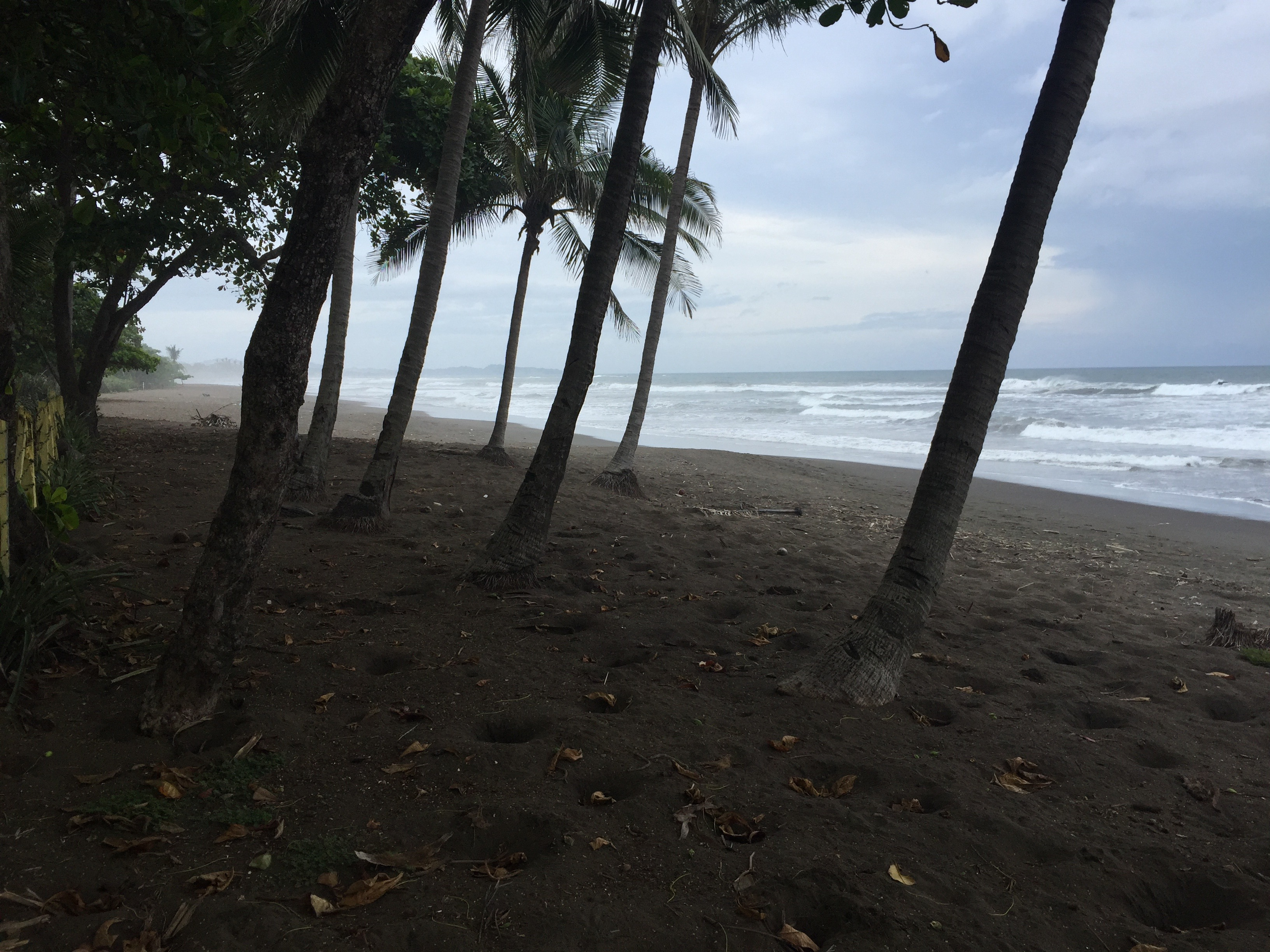 Palm trees line a black sand beach in Costa Rica.