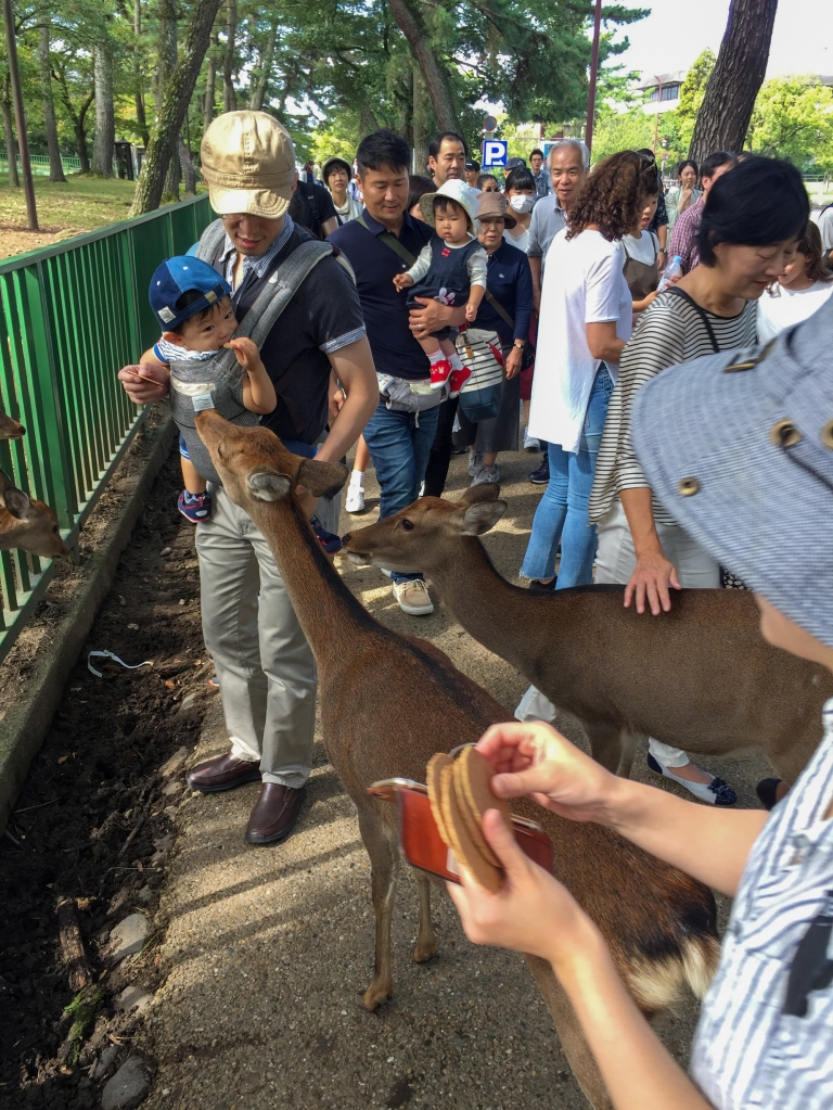 Tourists feed the feral deer of Nara, Japan.