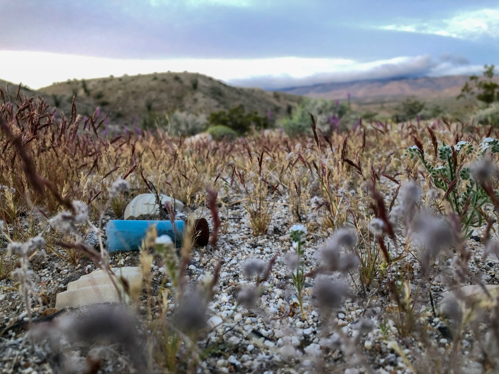 Shotgun shell hidden among the grass in the California desert.