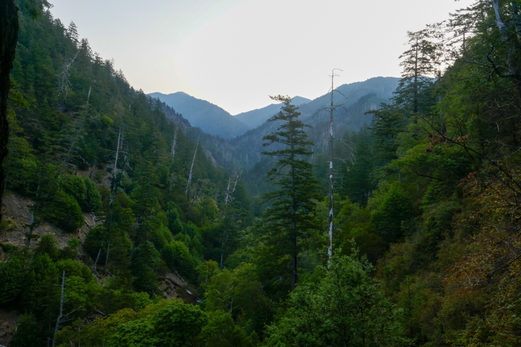 King Peak stands above the thick forest of the Lost Coast.