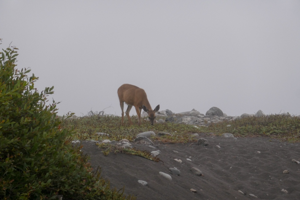 A deer grazes on the Lost Coast.