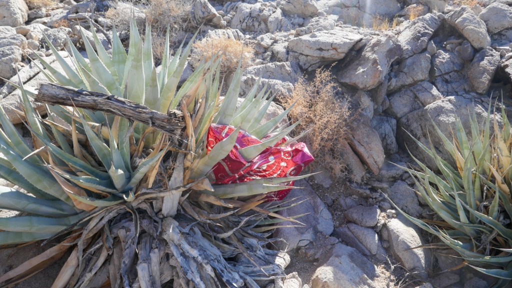 A mylar balloon on an agave plant in the Fish Creek Mountains.