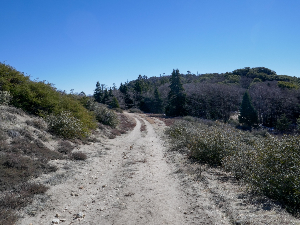 The fire road to the top of Hot Springs Mountain.
